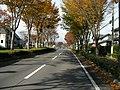 明石台の街路樹 - panoramio.jpg