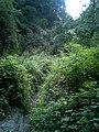 溪水边的小路 - panoramio.jpg