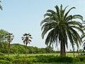 赤穂海浜公園 - panoramio - mikeneko (2).jpg