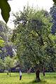 010g03h Pressekonferenz WasserKunst Zwischen Deich und Teich, das STANDBILD der Künstlerin Barbara Steinmeier genießt die Sonne im Park vom Edelhof Ricklingen.jpg
