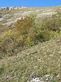01710 Thoiry, France - panoramio (48).jpg