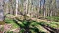 08 Grabhügelgruppe im Waldstück Hainbach.jpg