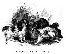 A black and white drawing of a group of several similar looking small spaniels with different markings.