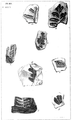 1847 BostonJournal NaturalHistory v5 illus9.png