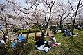 190406 Settsukyo Sakura Park Takatsuki Osaka Japan03s3.jpg
