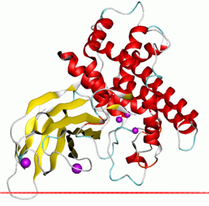 Zinc-dependent phospholipase C - Alpha toxin of Clostridium showing the zinc dependent phospholipase domain in red and the PLAT domain in yellow