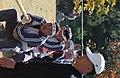 2004년 10월 22일 충청남도 천안시 중앙소방학교 제17회 전국 소방기술 경연대회 DSC 0148.JPG