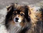 20160327 pies nierasowy 3691.jpg