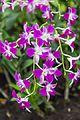 2016 Singapur, Ogrody botaniczne (343).jpg
