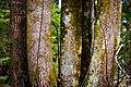 2018-04-01 Trees (26300397997).jpg