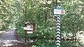 20200728 132231 Białowieża Forest.jpg
