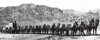 Twenty-mule team - Twenty-mule team in Death Valley, California