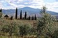 53026 Pienza, Province of Siena, Italy - panoramio (21).jpg