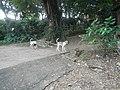 9983Prenza Dam Marilao 20.jpg