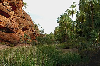 National parks of the Northern Territory - Palm Valley, located within Finke Gorge National Park