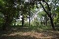 AJC Bose Indian Botanic Garden - Howrah 2018-04-01 2388.JPG