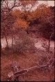AUTUMN TREES - NARA - 546090.tif