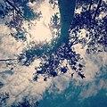 A blue skyy.jpg