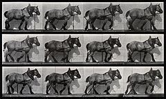 A cart-horse walking. Photogravure after Eadweard Muybridge, Wellcome V0048729.jpg