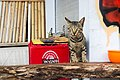 A cat on Gili Trawangan Island.jpg