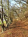 A path at the edge of Easter Wood - geograph.org.uk - 686000.jpg