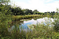A pond with waterside plants westwards outside the Woodland Trust wood Theydon Bois Essex England.JPG