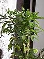 Ab plant 863.jpg
