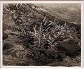 Adrian zingg, angolo di ruscello con canne e altre piante, 1800 ca.jpg