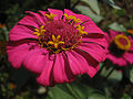 African flower.jpg