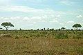African landscape (393188499).jpg