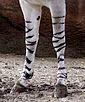 African wild Ass-legs.jpg