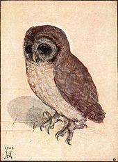 The Little Owl 1506 By Albrecht Durer