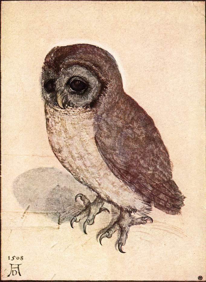 Albrecht Dürer - The Little Owl - WGA7367