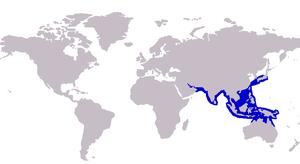 Razorbelly scad - Image: Alepes kleinii distribution