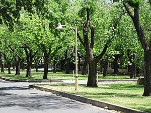 Rose Park, South Australia - Alexandra Avenue, Rose Park
