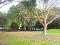 Alexandria NSW 2015, Australia - panoramio (25).jpg