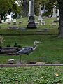 Allegheny Cemetery Heron and Headstones.jpg