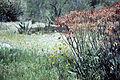 Aloe chabaudii02 WPC.jpg