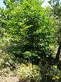 Alpujarras (12859751254).jpg