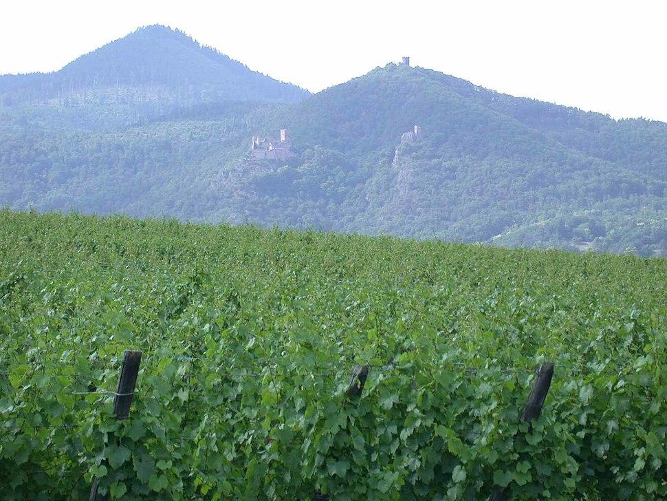 Alsacia vinhas