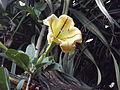 Ambalavao flowers I.JPG