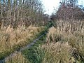 Amberswood - geograph.org.uk - 1532292.jpg