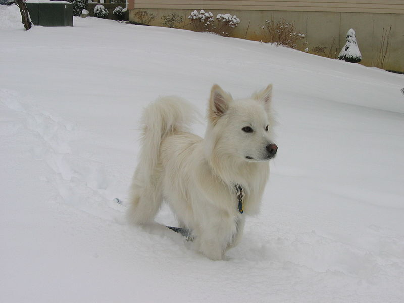 Alaskan Dog Names And Meanings