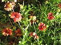Amin al-Islami Park - Trees and Flowers - Nishapur 045.JPG