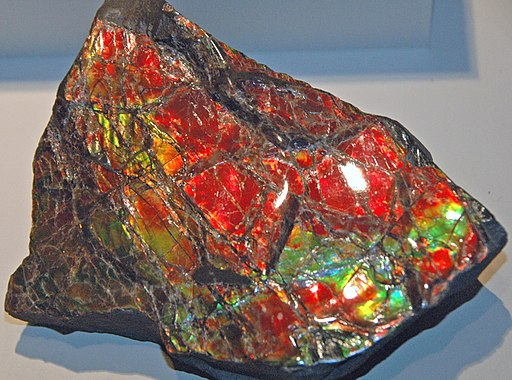 Ammolite from Placenticeras fossil ammonite (Bearpaw Formation, Upper Cretaceous, 70-75 Ma; mine in St. Mary River Valley, Alberta, Canada) 3 (32180813094)