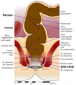 Anal stenosis treatment