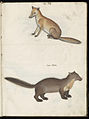 Animal drawings collected by Felix Platter, p2 - (73).jpg