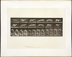 Animal locomotion. Plate 710 (Boston Public Library).jpg