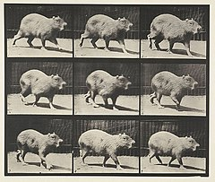 Animal locomotion. Plate 746 (Boston Public Library).jpg