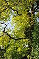 Arboretum 2011-07-31 18-21-52.JPG